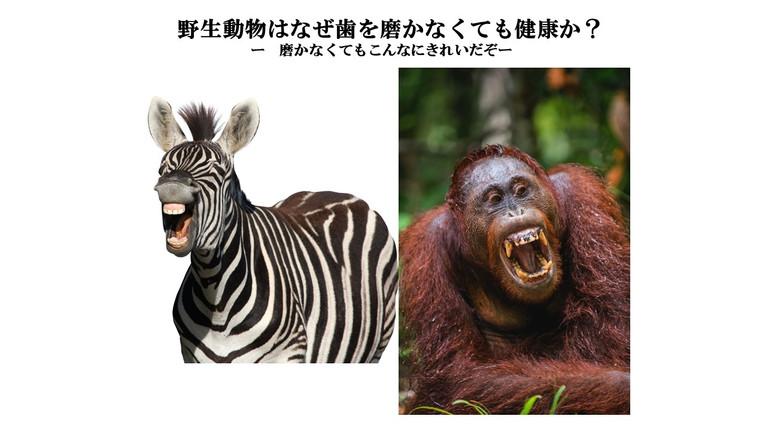 野生動物はなぜ歯を磨かなくても健康か?