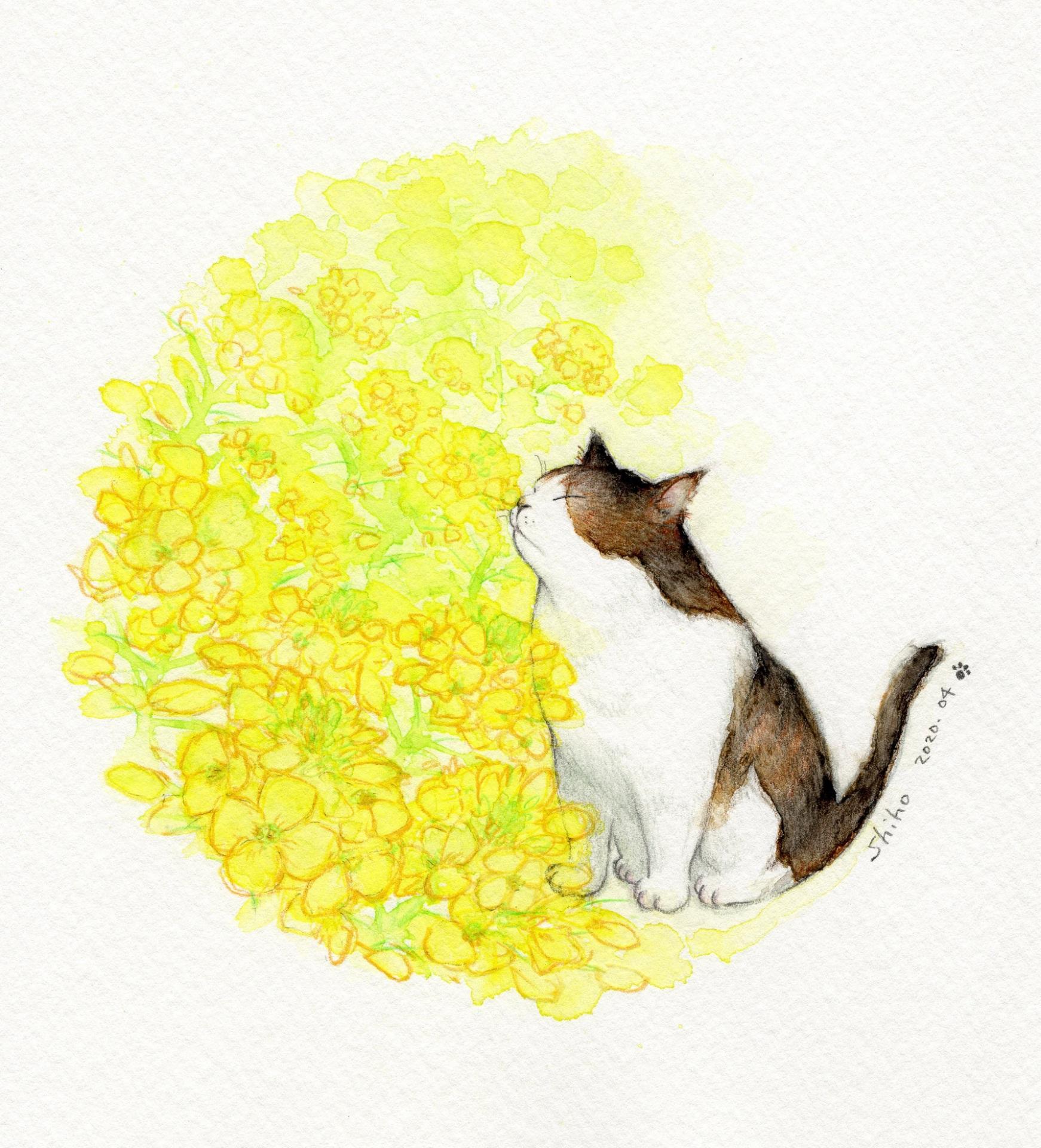 菜の花とネコ