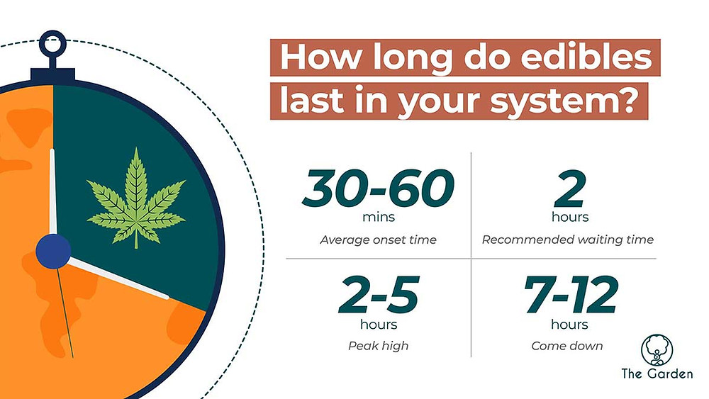 how long do edibles last in your system timeline