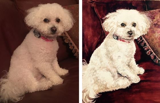 Bailey Before-After.JPG