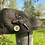 Thumbnail: Pack «Casquette style Anglaise+ broche »