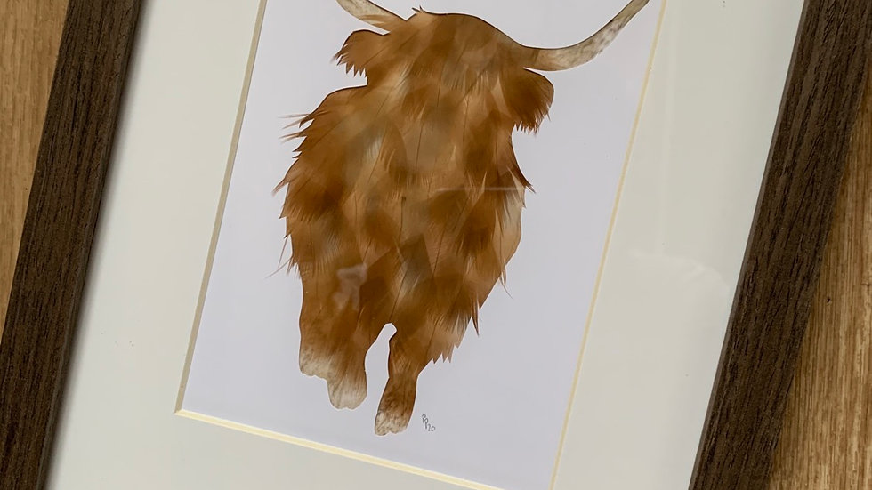 «Highland cow»