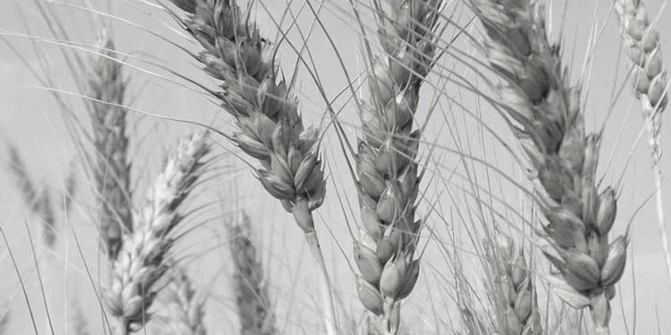 Agronegócio: Financiamento, planejamento sucessório, finanças e tecnologia (1)