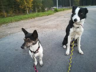 Rally-O in Jyväskylä 26.9.