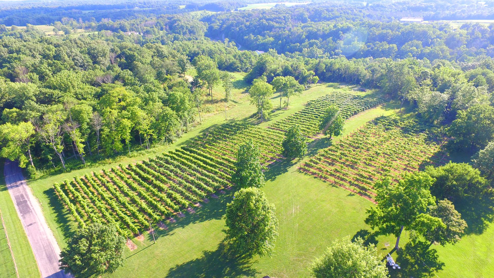 Aerial photo of vineyard.JPG