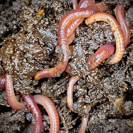 Worms Wonderful Worms