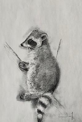Le raton