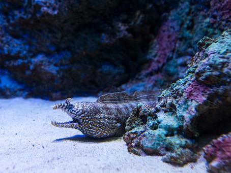 Grand Aquarium in Saint-Malo – Attraktion an der bretonischen Nordküste
