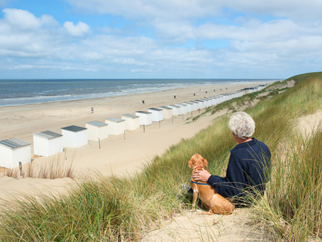 Hundestrand in Holland