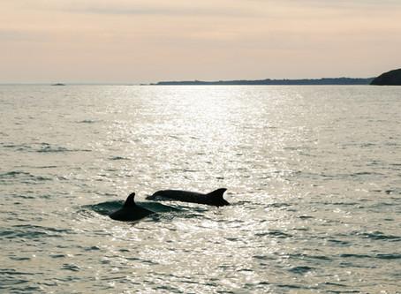 Delfin-Touren in der Bretagne: Auf Tuchfühlung mit Flipper