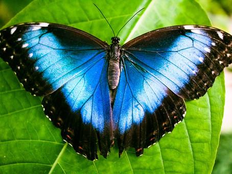 Schmetterlingsgarten Vannes: Tropisches Paradies in der Bretagne