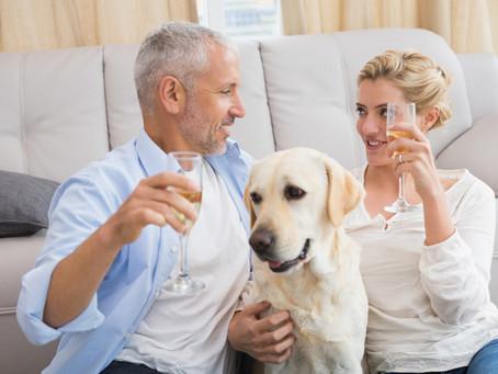 Silvester mit Hund - ohne Böllerlärm und Knallerei