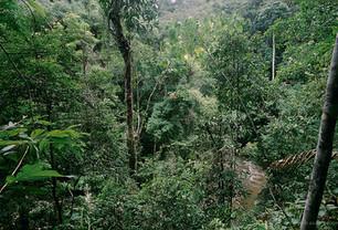 La FAO pide potenciar a los pequeños productores forestales
