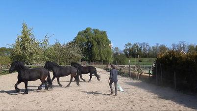 grondwerk paarden.jpg