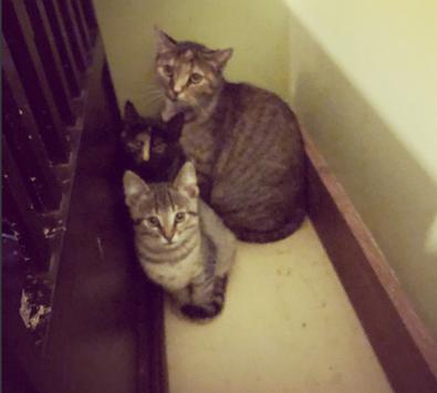 Muffin & Kittens