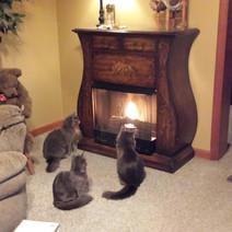 Sissy, Smokey, & Sheldon