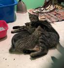 Poppy & Kittens