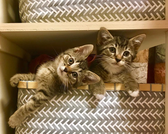 Louie & Maisie