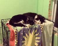 Clara & LuLu