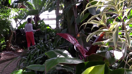 Glasshouse: a collaborative performance film