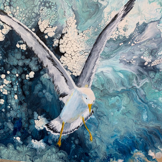 """Sea Gull"""
