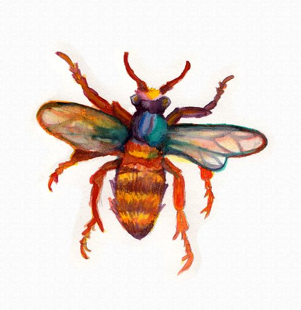 bug copy.png