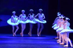 Swan Lake Performance 2016