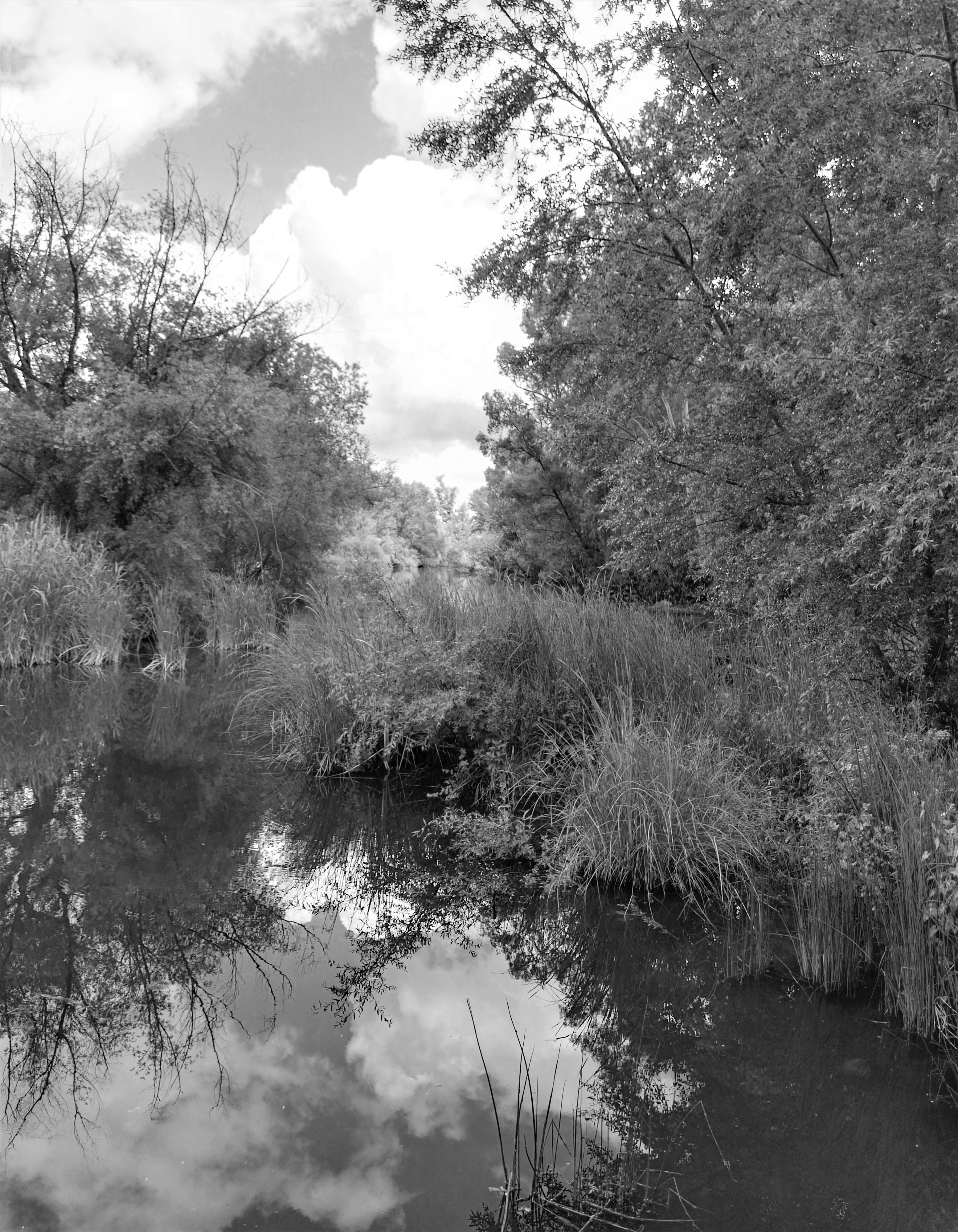 Río Ardila / Ardila river
