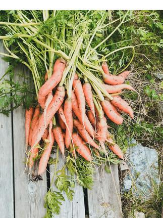 dyrke grønnsaker.jpg