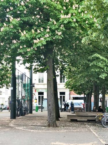trær 5.jpg