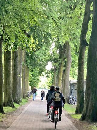 trær.jpg