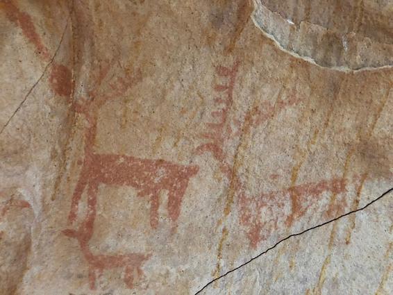 Ciervos de la cueva de las Palomas en Murcia.