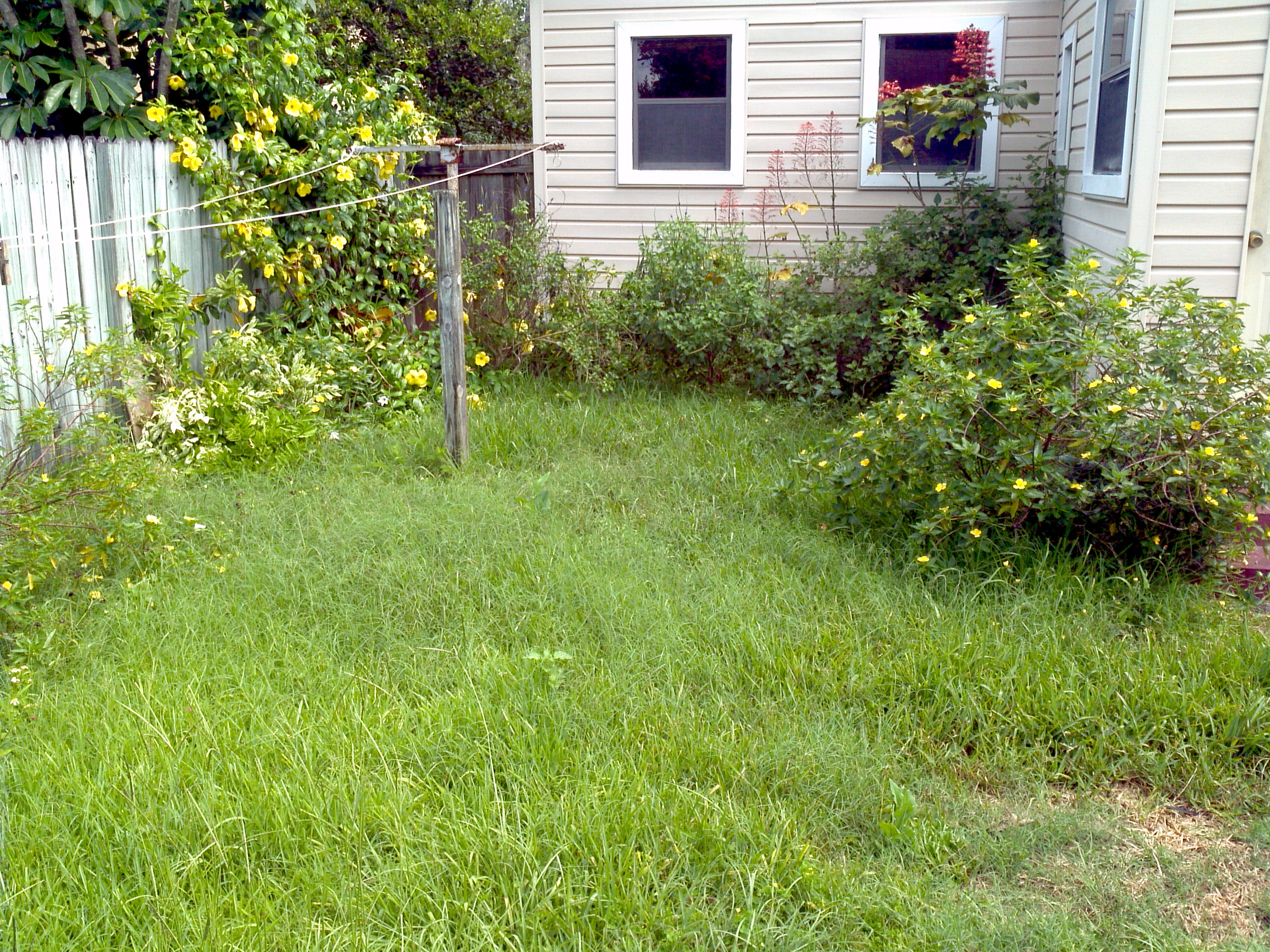 Backyard before
