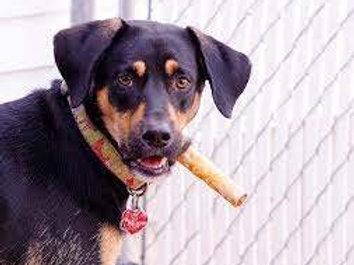Pup A Rillo