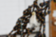 190802_ForeverThreads_DSC1471_2000px.png