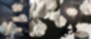 Lladro Nightbloom-09.png