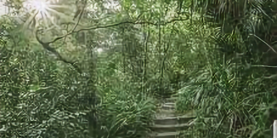 Forest Exploring at Ravine Gardens State Park