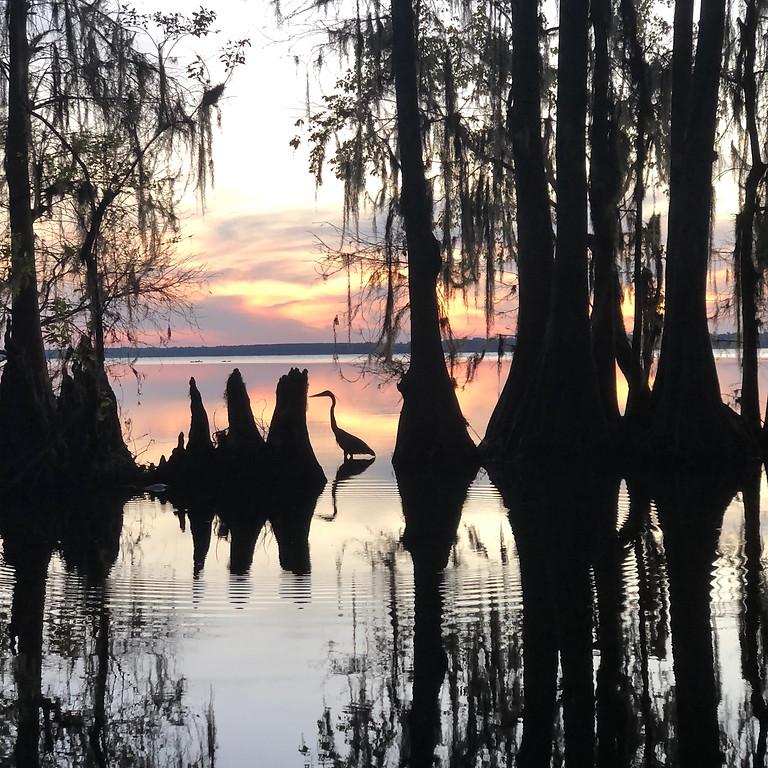 Sunset Forest Bathing on Lake Pithlachocco