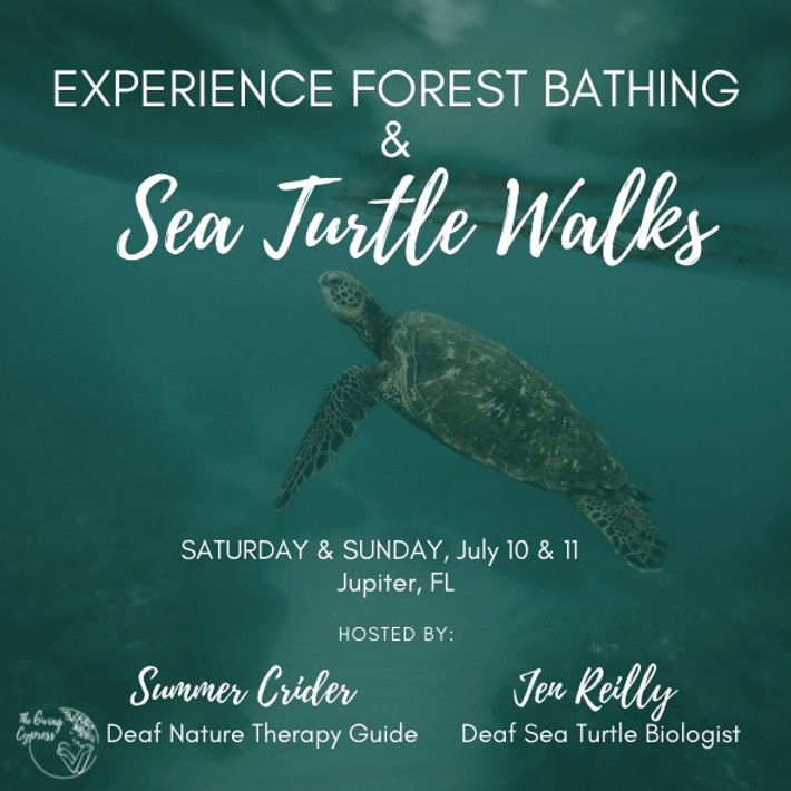 Experience Forest Bathing & Sea Turtle Walk