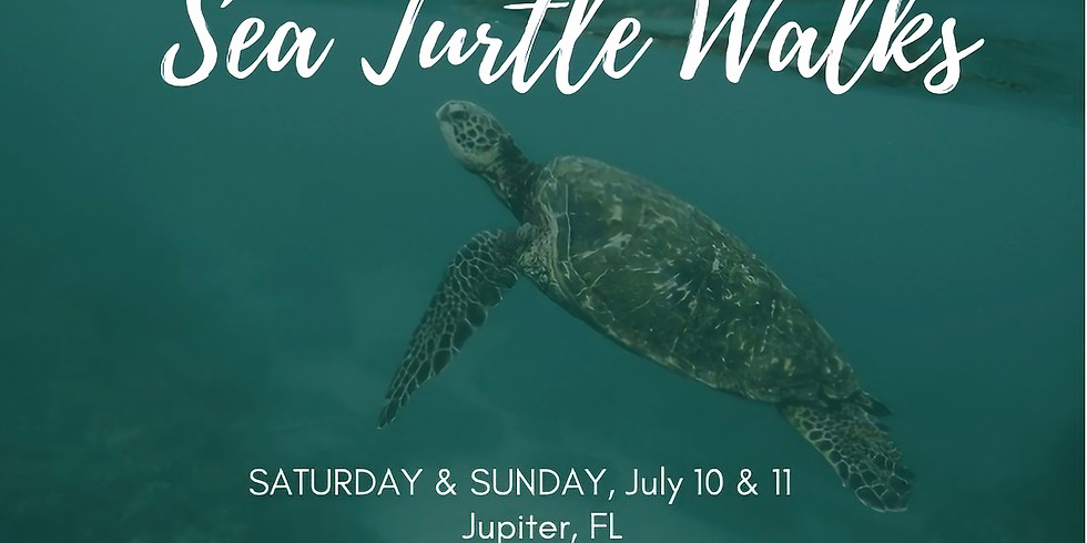 Experience Sunset Forest Bathing & Sea Turtle Walk