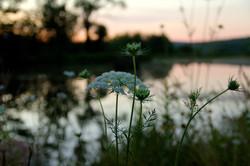 Summa Ithaca Retreat Flower
