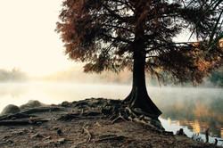 Cypress at RedBud