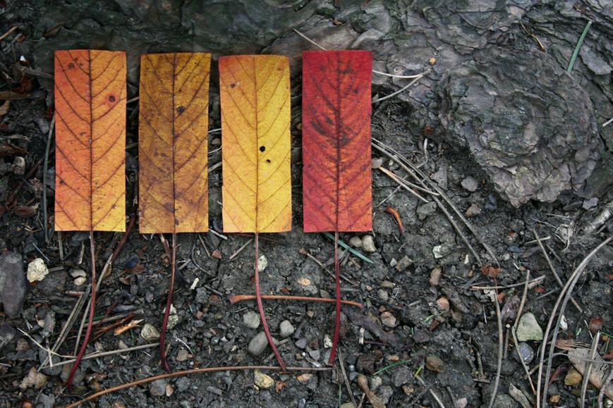 geometric-autumn-xijpg