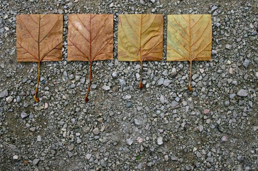 geometric-autumn-viiijpg