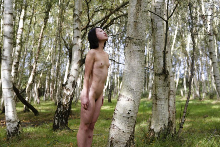 parallel-arboreal-vijpg