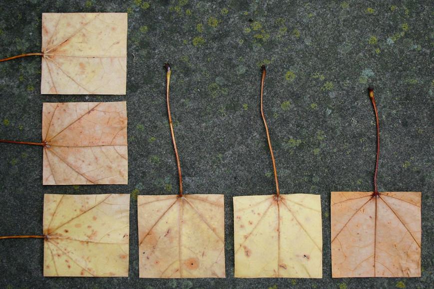 geometric-autumn-xjpg