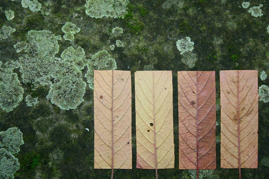 geometric-autumn-iijpg