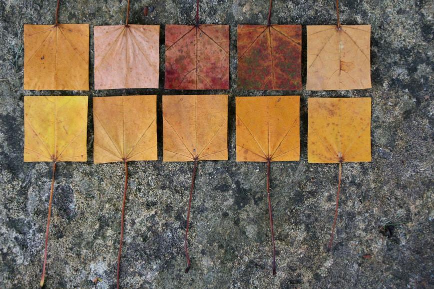 geometric-autumn-ixjpg
