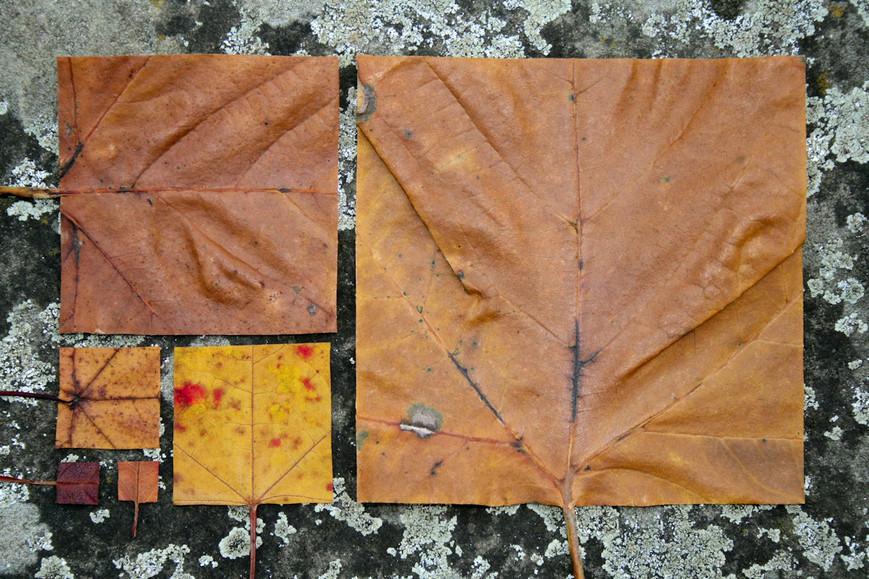geometric-autumn-ijpg