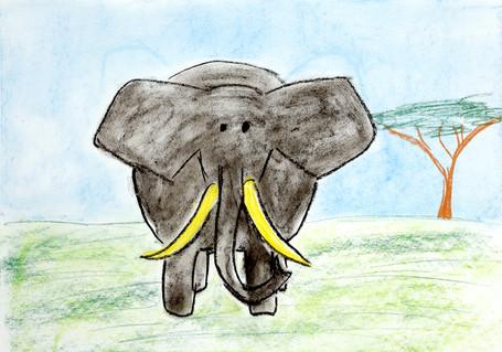 Elephants are round.